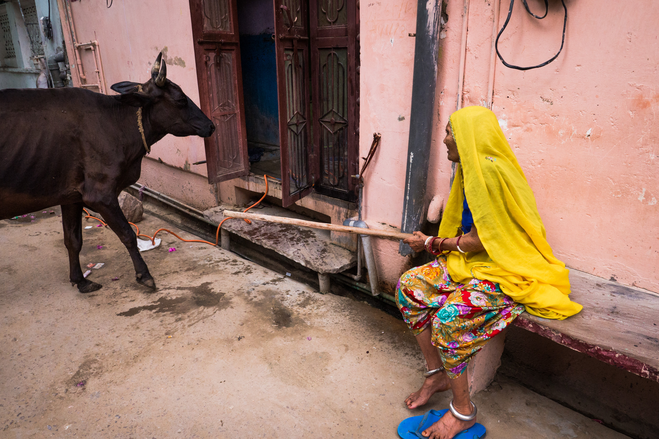 _24 Old Woman stopping cow entering Pushkar.jpg