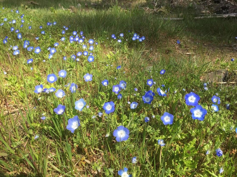 Wildflowers seen on hike above Lake Whatcom - author photo