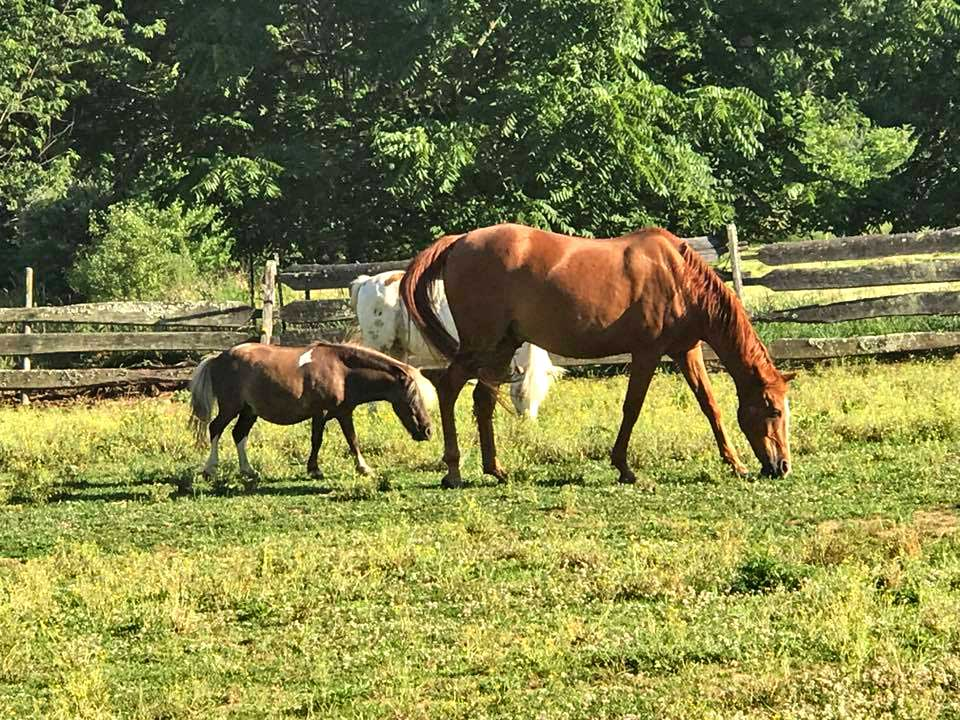Visit with any one of our three horses during your stay. We have a large brown horse, a white pony, and a miniature horse who all love meeting new travelers.