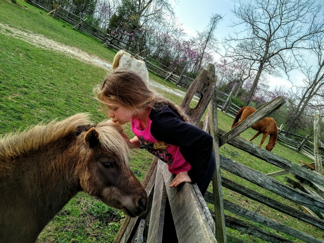 Child_Horse_Kiss.jpg