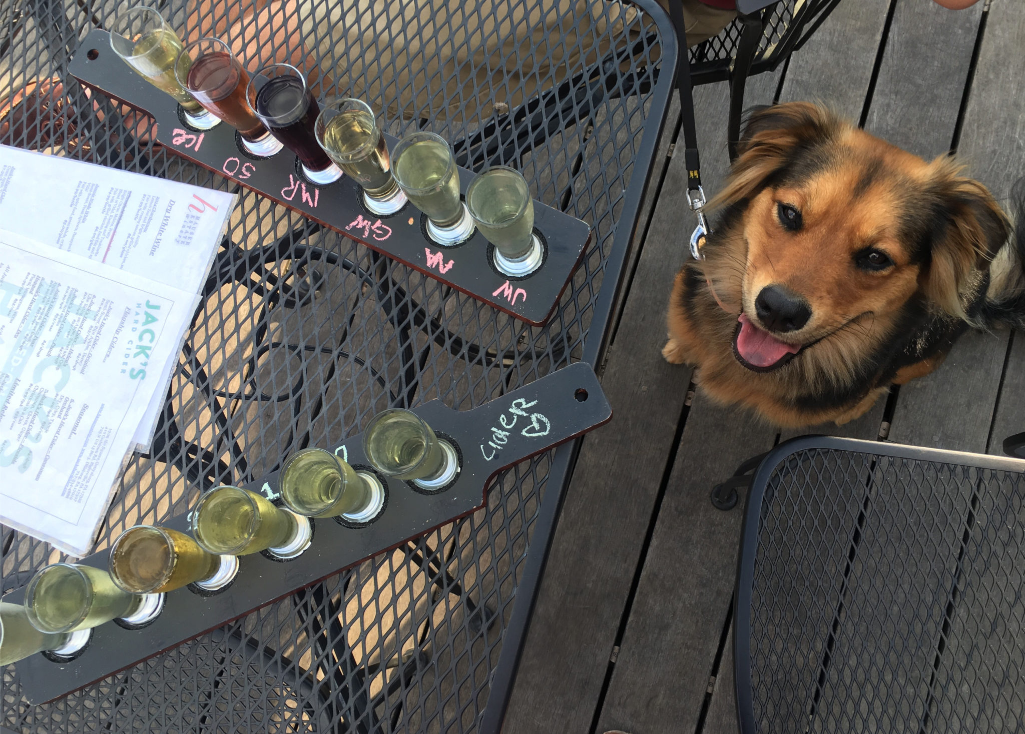 Dog enjoying cider flight at Jack's Hard Cider.