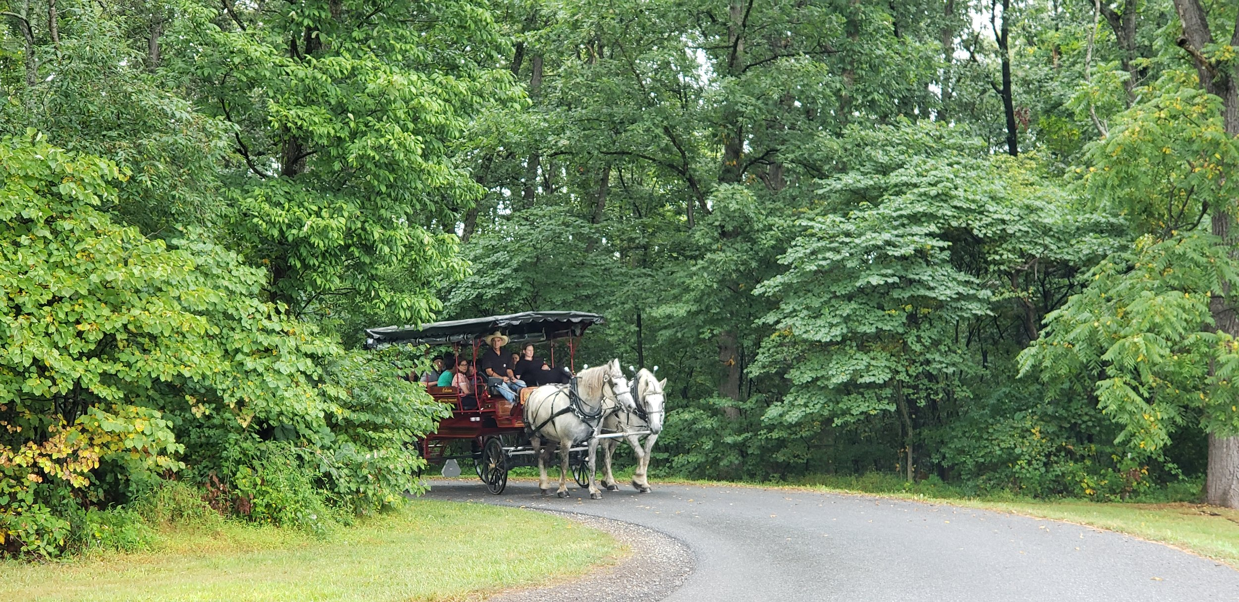 Tour the Battlefield by horse-drawn carriage