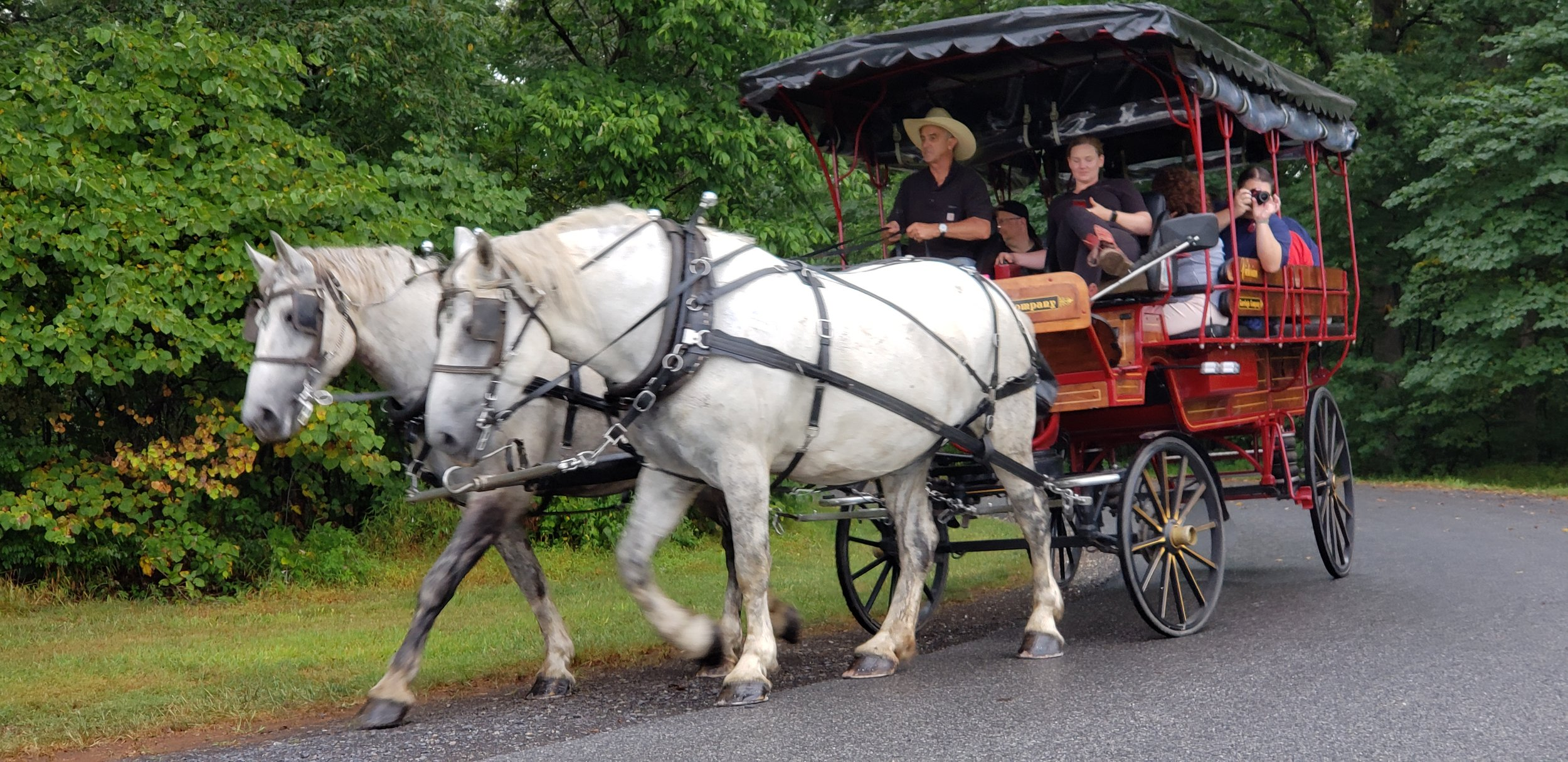 Two strong draft horses from the Victorian Carriage Company pull the wagon through the Gettysburg Battlefield