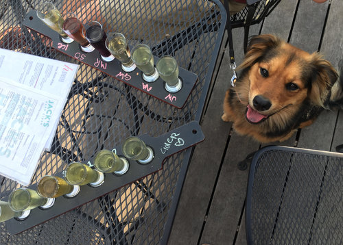Dog enjoying cider flight at Jack's Hard Cider.