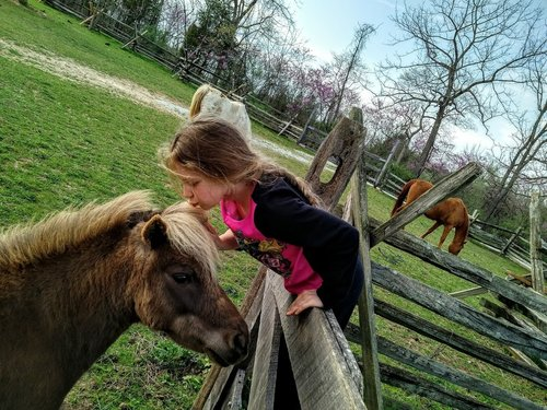 Our rescue horses love making new friends.