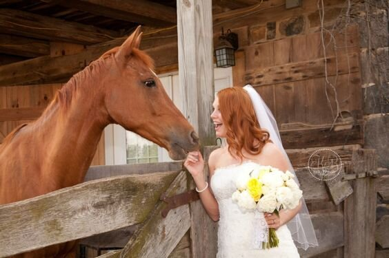 Horse Corrals - Cozy up next to the fence of the horse corral for perfect pictures!Photography by: Kelly's Photos
