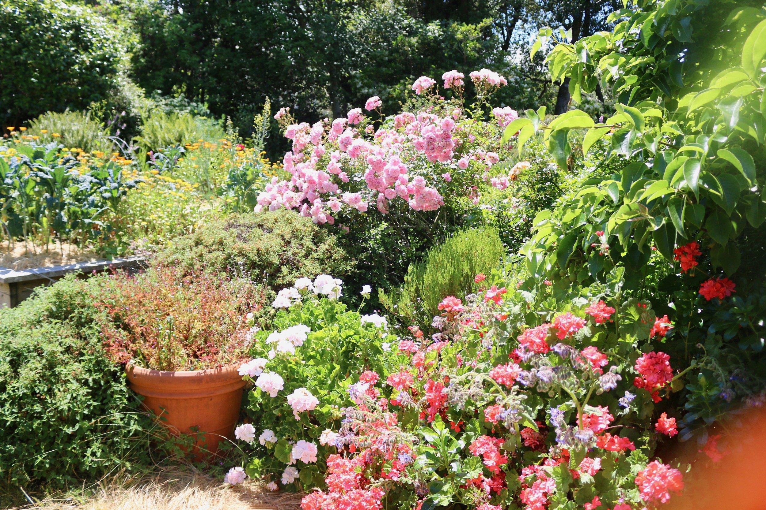 Flowers in the Eco-Refuge back garden. Photo by Sim Van der Ryn.