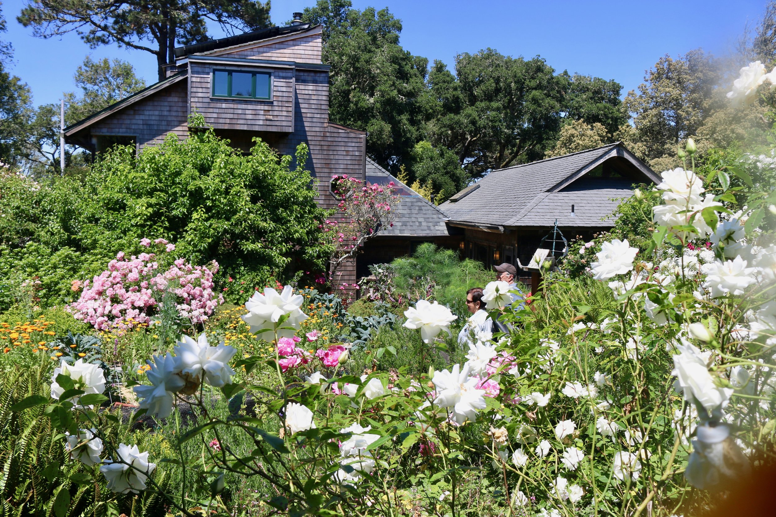 Eco-Refuge back Garden.