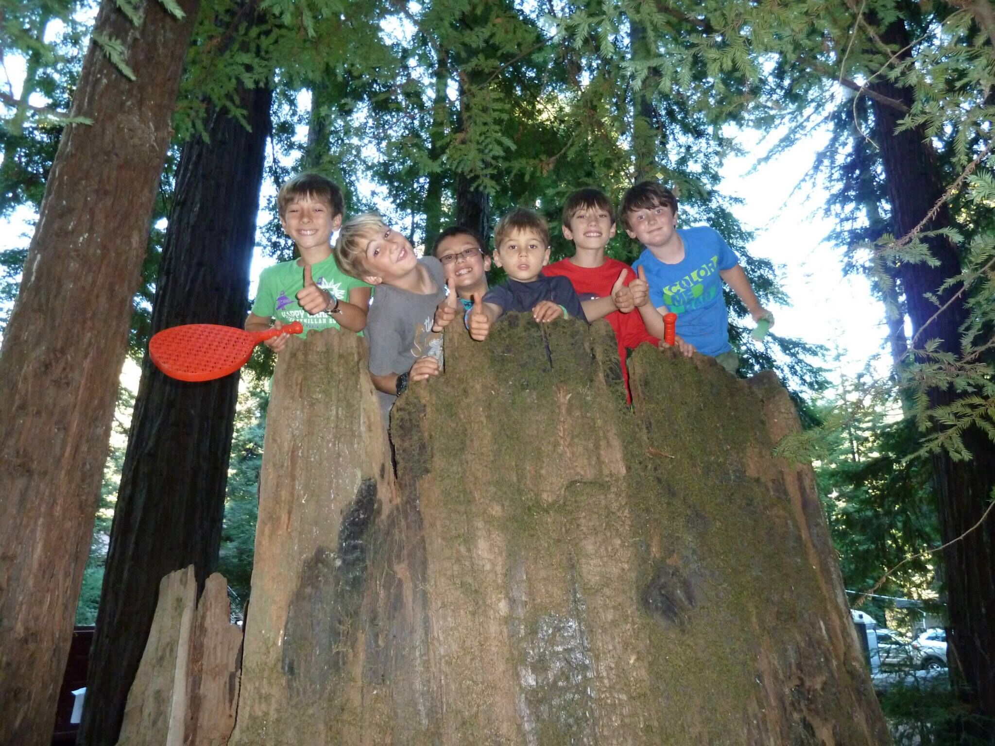 kids tree.jpg