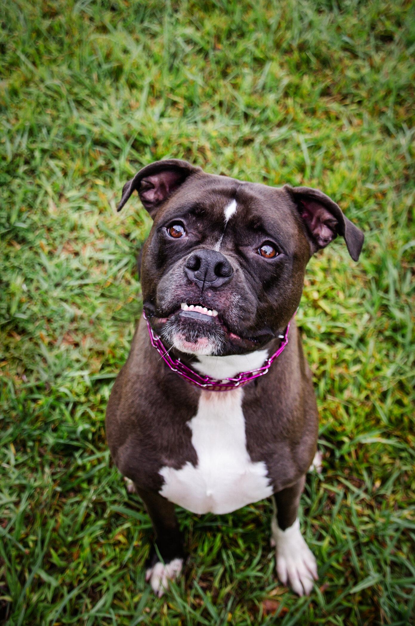 Pet Photography | Marietta, GA