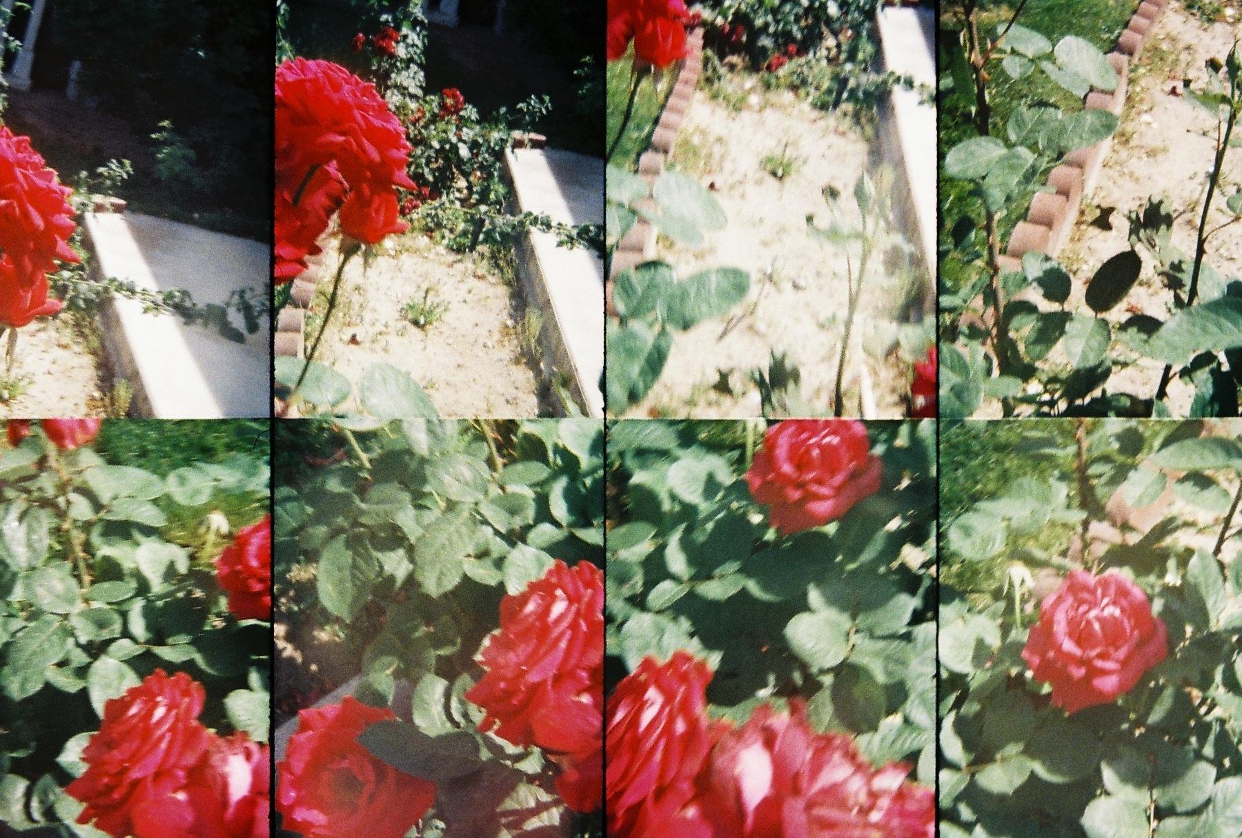 endless flowers (4)  2011