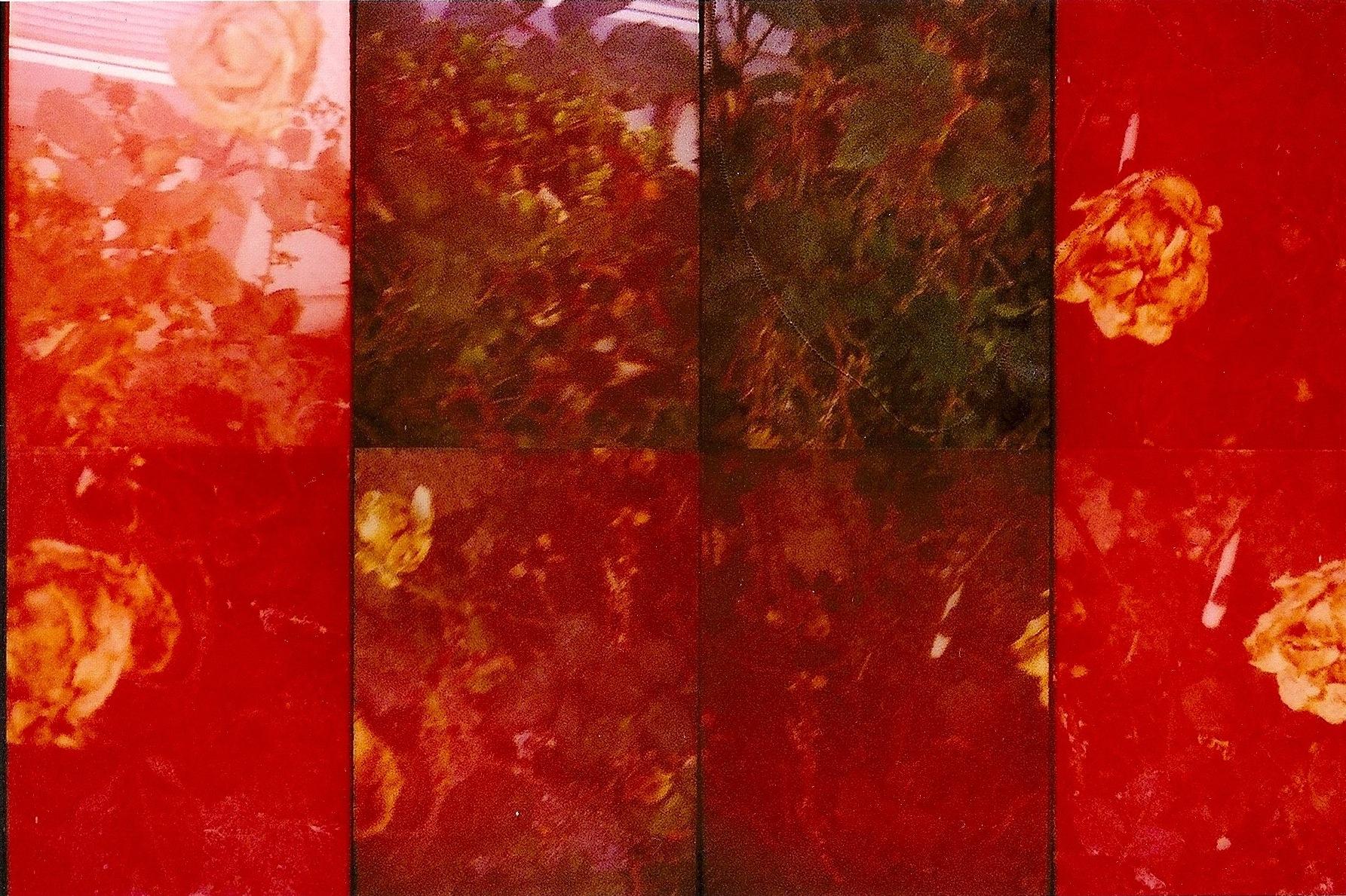 endless flowers (2)  2011