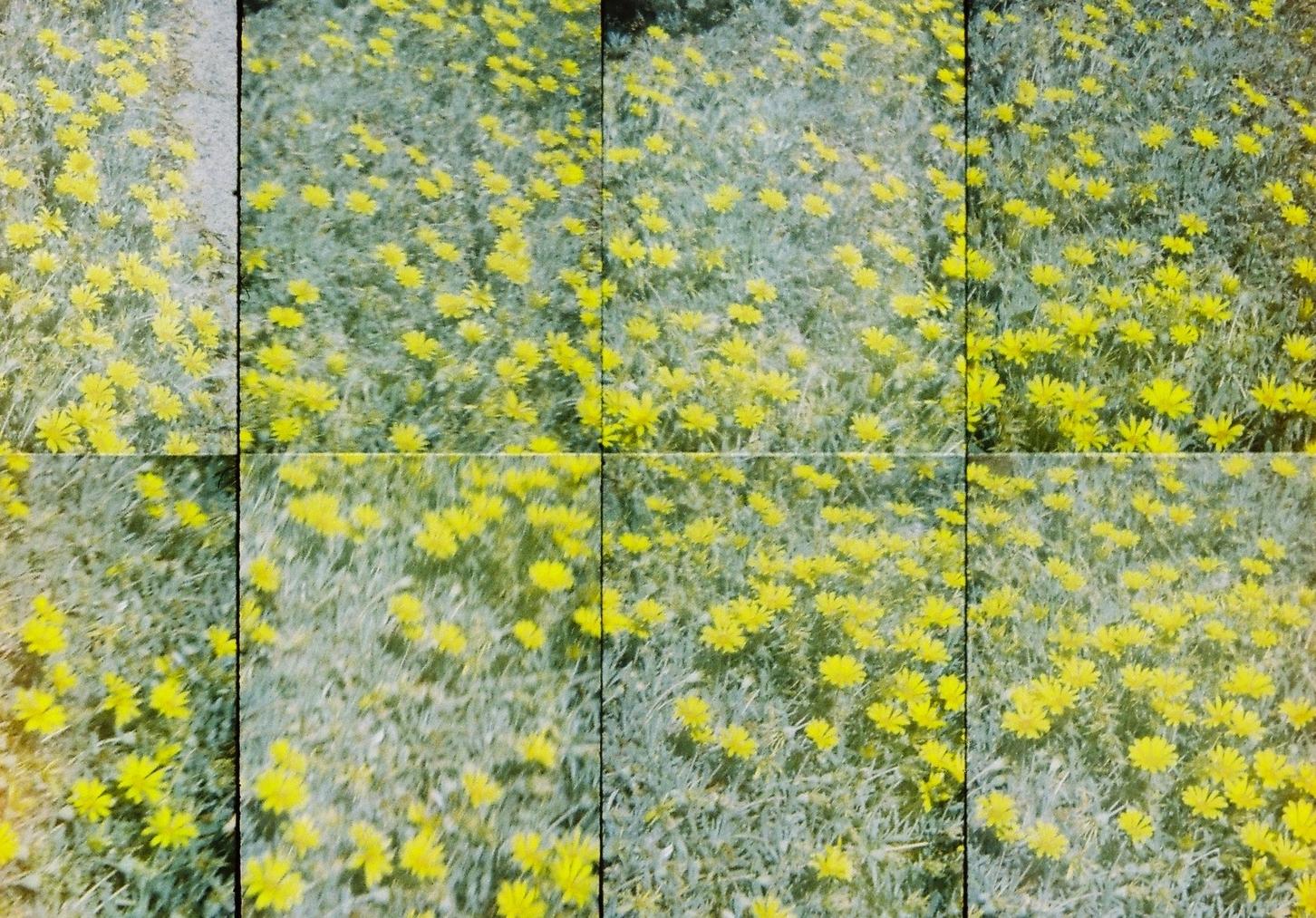 endless flowers (3)  2011