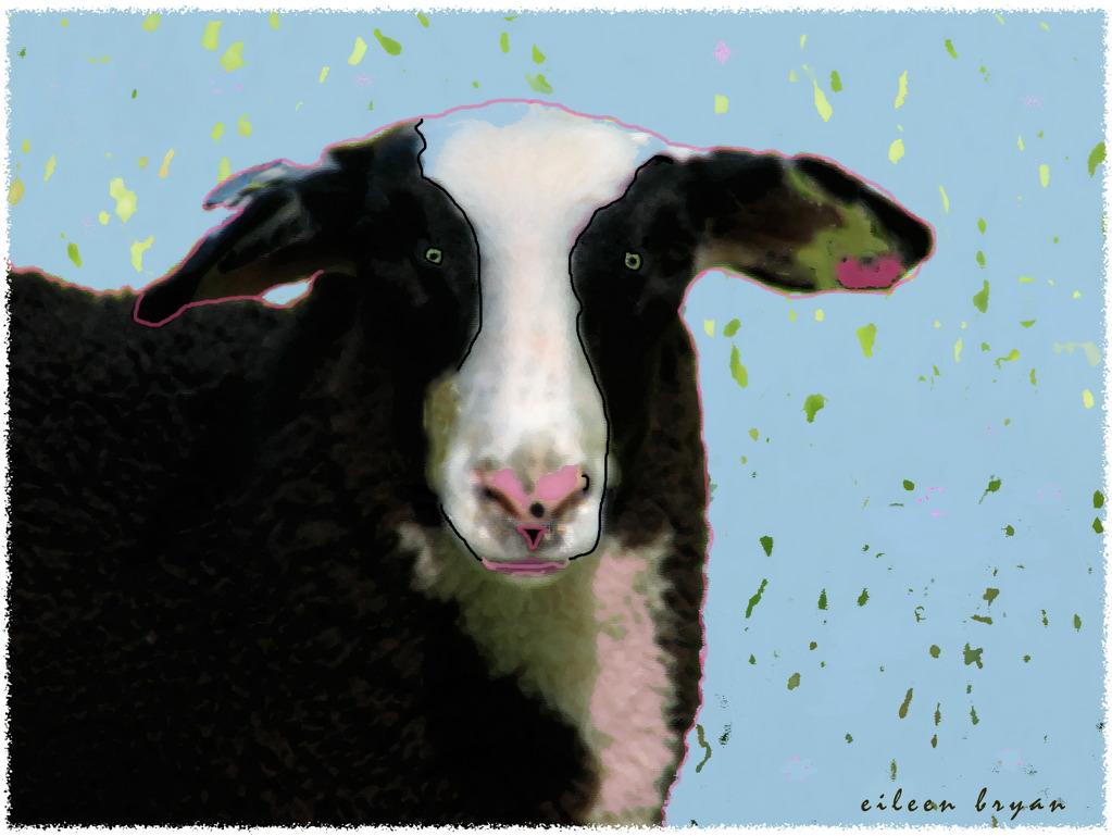 Sheep Frontal .jpg