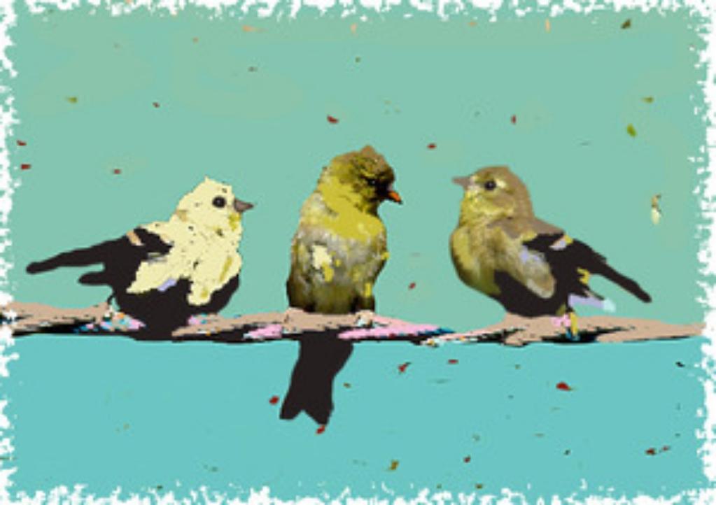 Three Birdies on a Branch