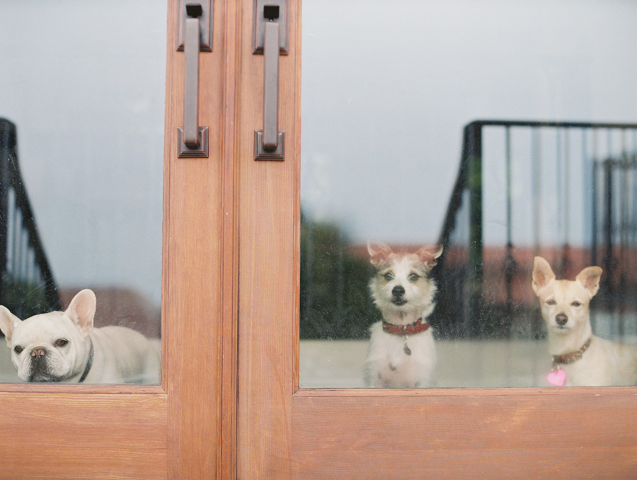 furbaby-family-dogs-cats-volkswagon-bug-victoria-oleary-photography-palos-verdes-01.jpg