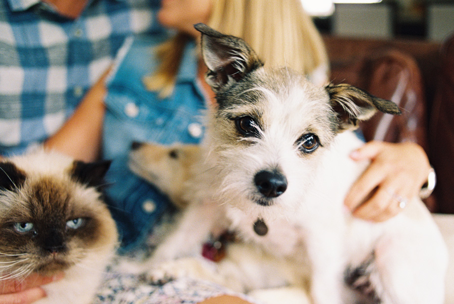 furbaby-family-dogs-cats-volkswagon-bug-victoria-oleary-photography-palos-verdes-04.jpg