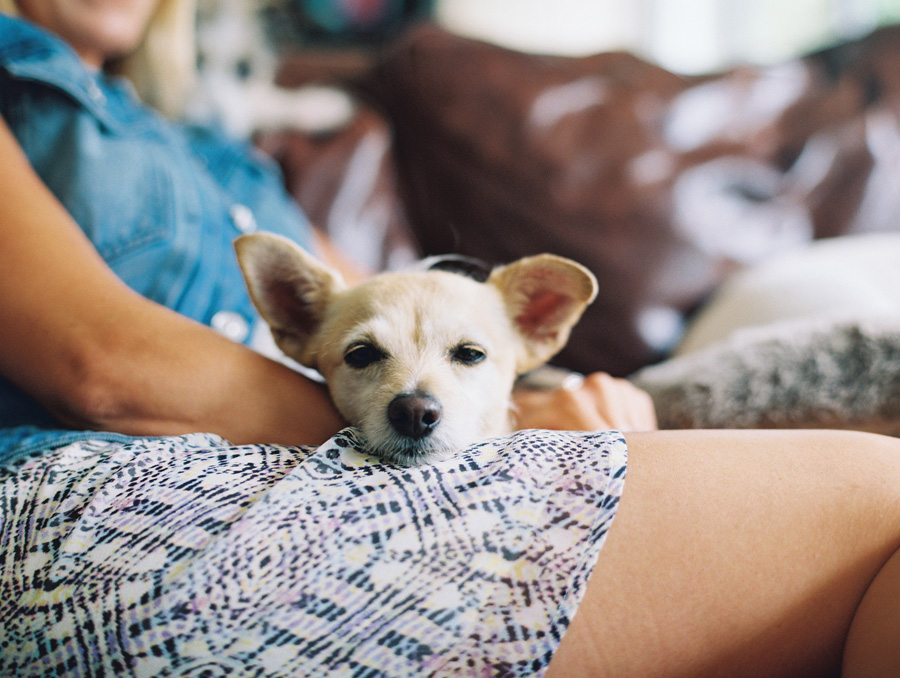 furbaby-family-dogs-cats-volkswagon-bug-victoria-oleary-photography-palos-verdes-07.jpg