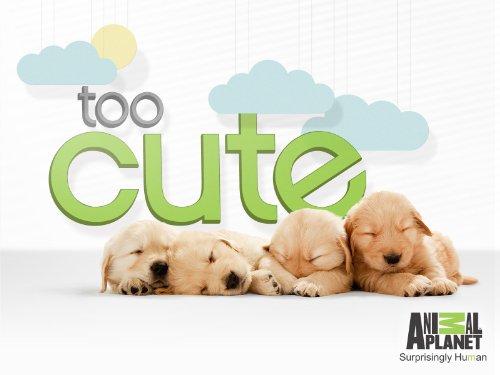 Too Cute Thumb 1.jpg