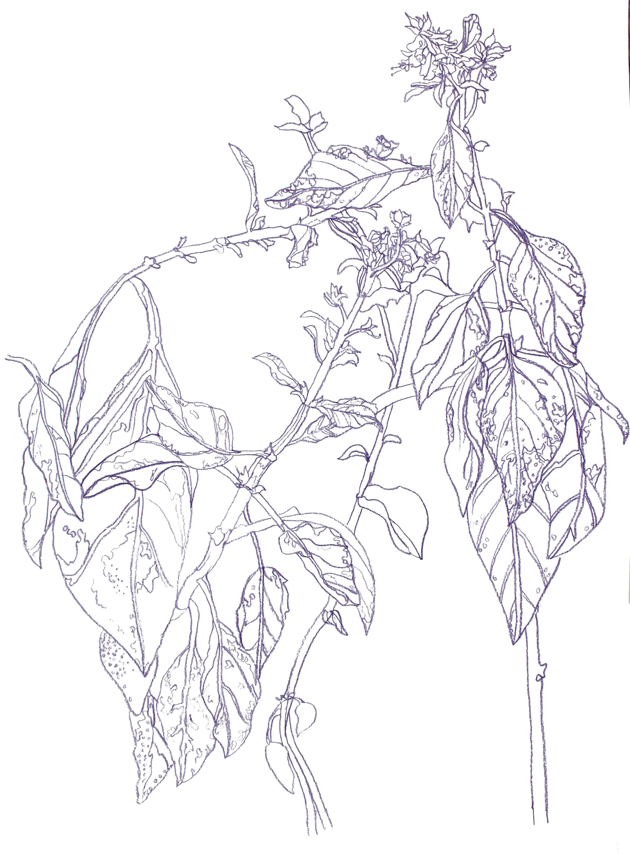 plant1maybe.jpg