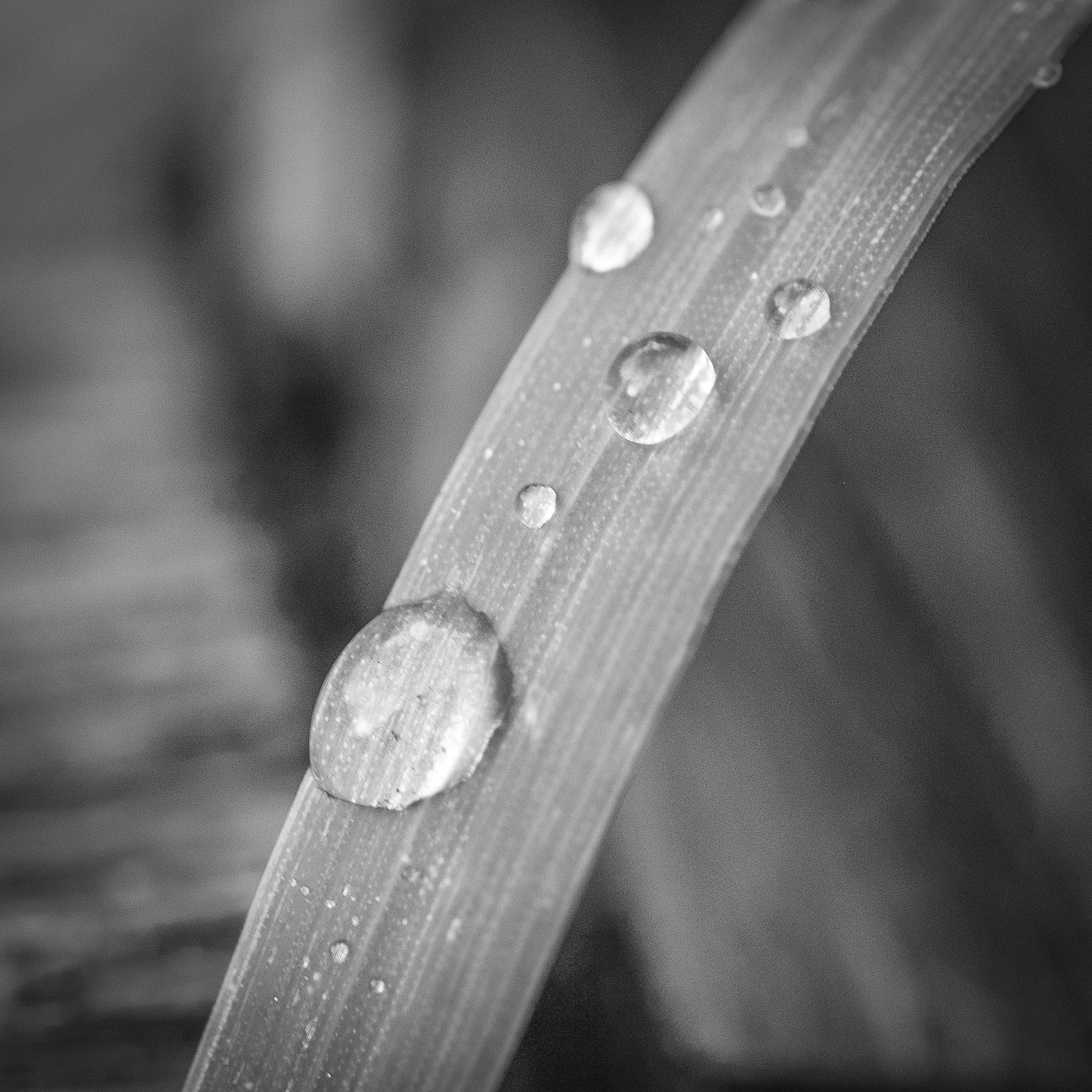 raindrops_12July2016_ALI31329.jpg