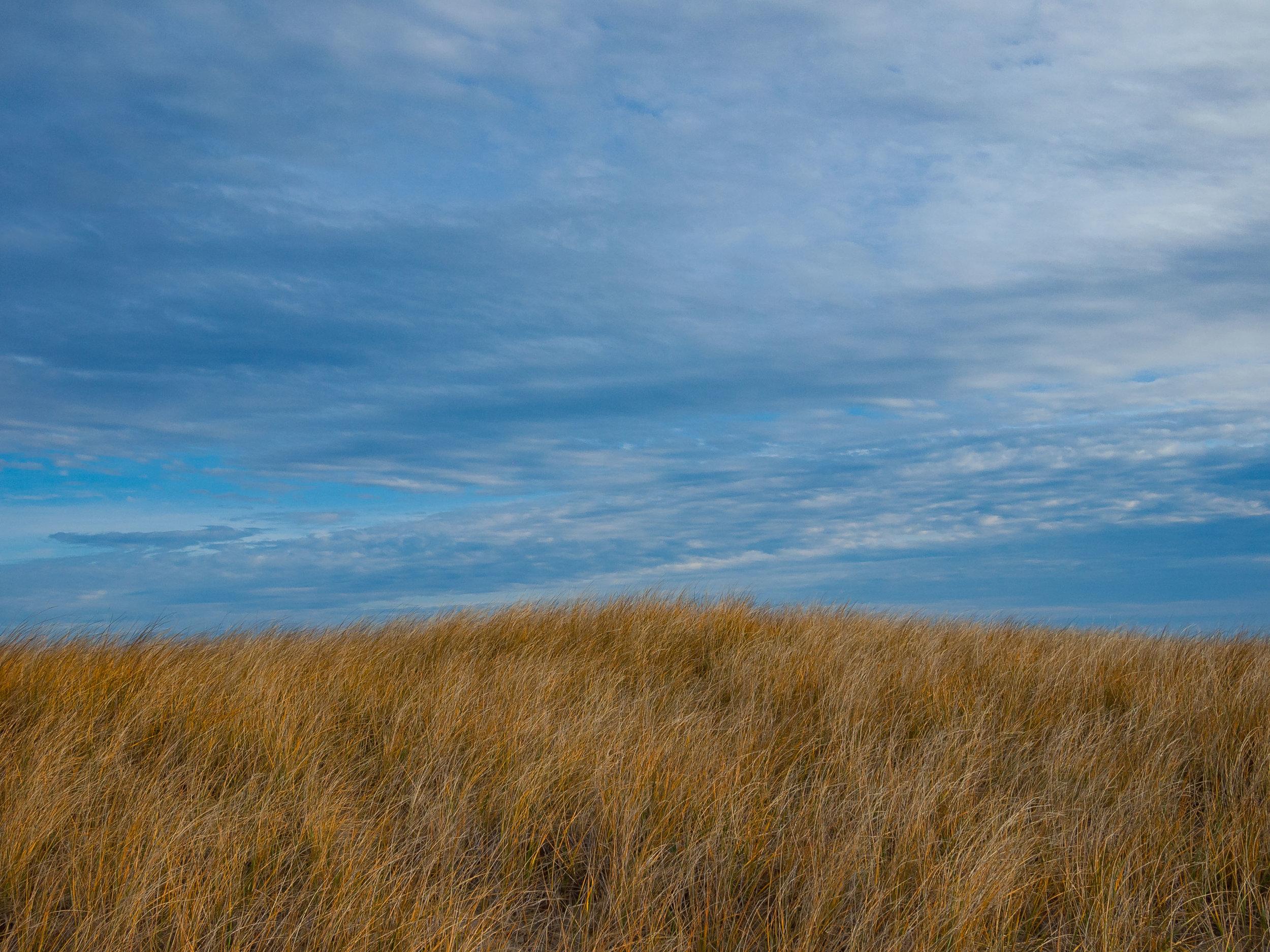 skywheat.jpg
