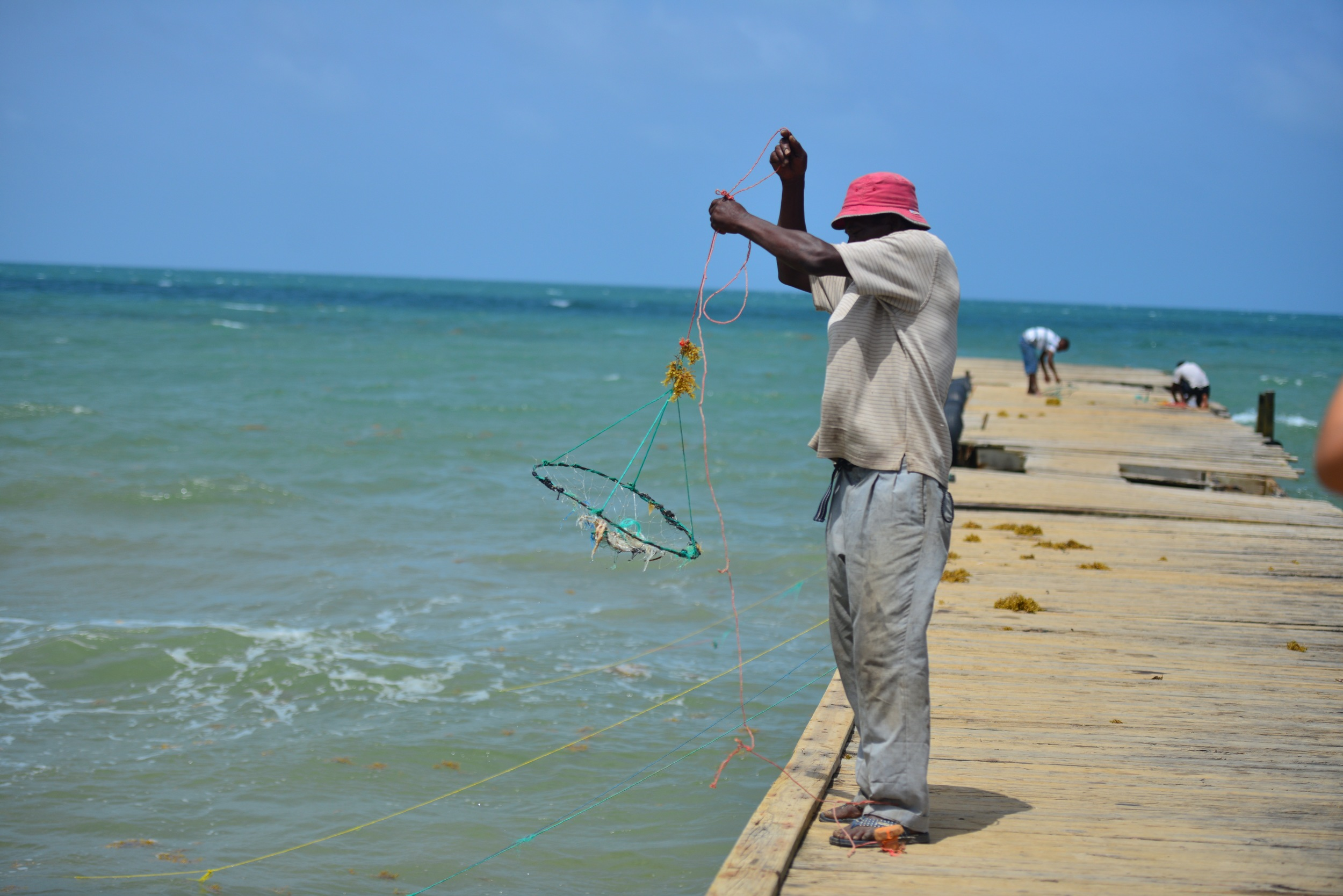Some fear that large amounts of Sargassum could disrupt the livelihoods of fisherman or drive away tourists.