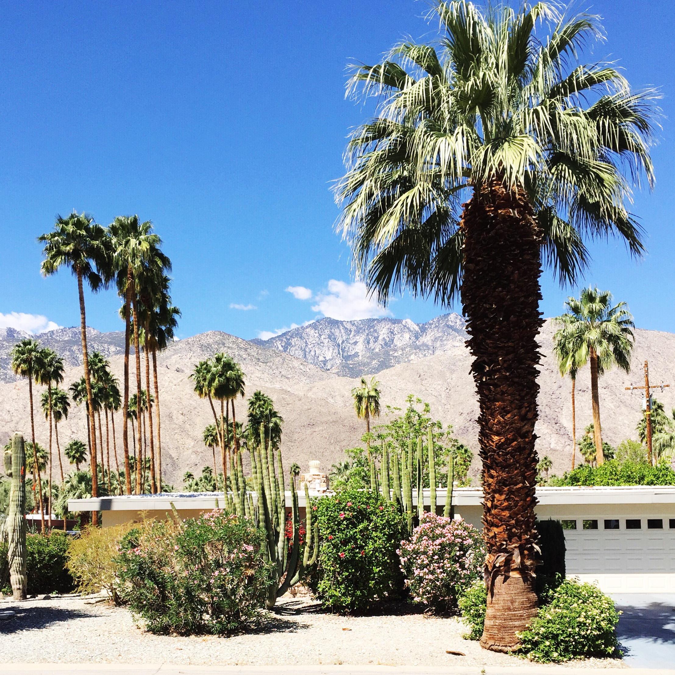 Marabou Design Palm Springs 2016