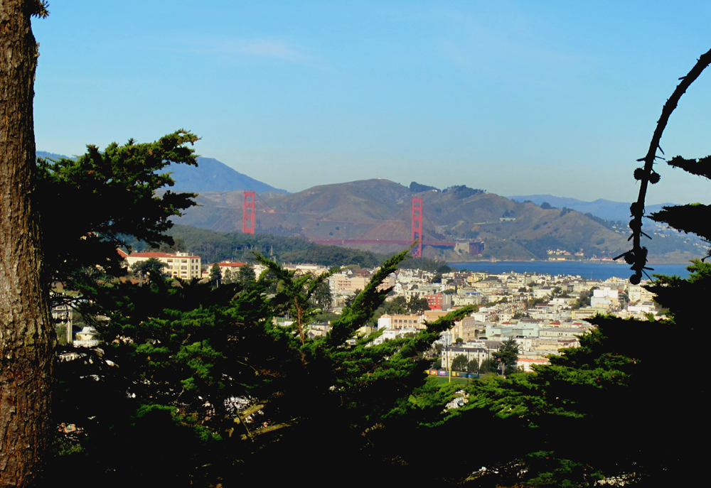 Hike to the top of Buena Vista Park  Scenic views from the oldest official park in San Francisco