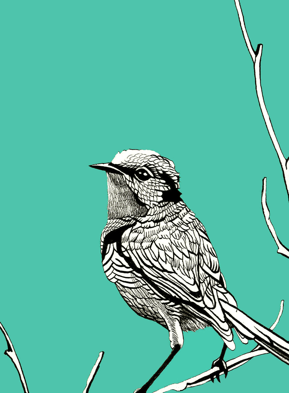 BIRD BLUE 8x10 WEBSITE.jpg