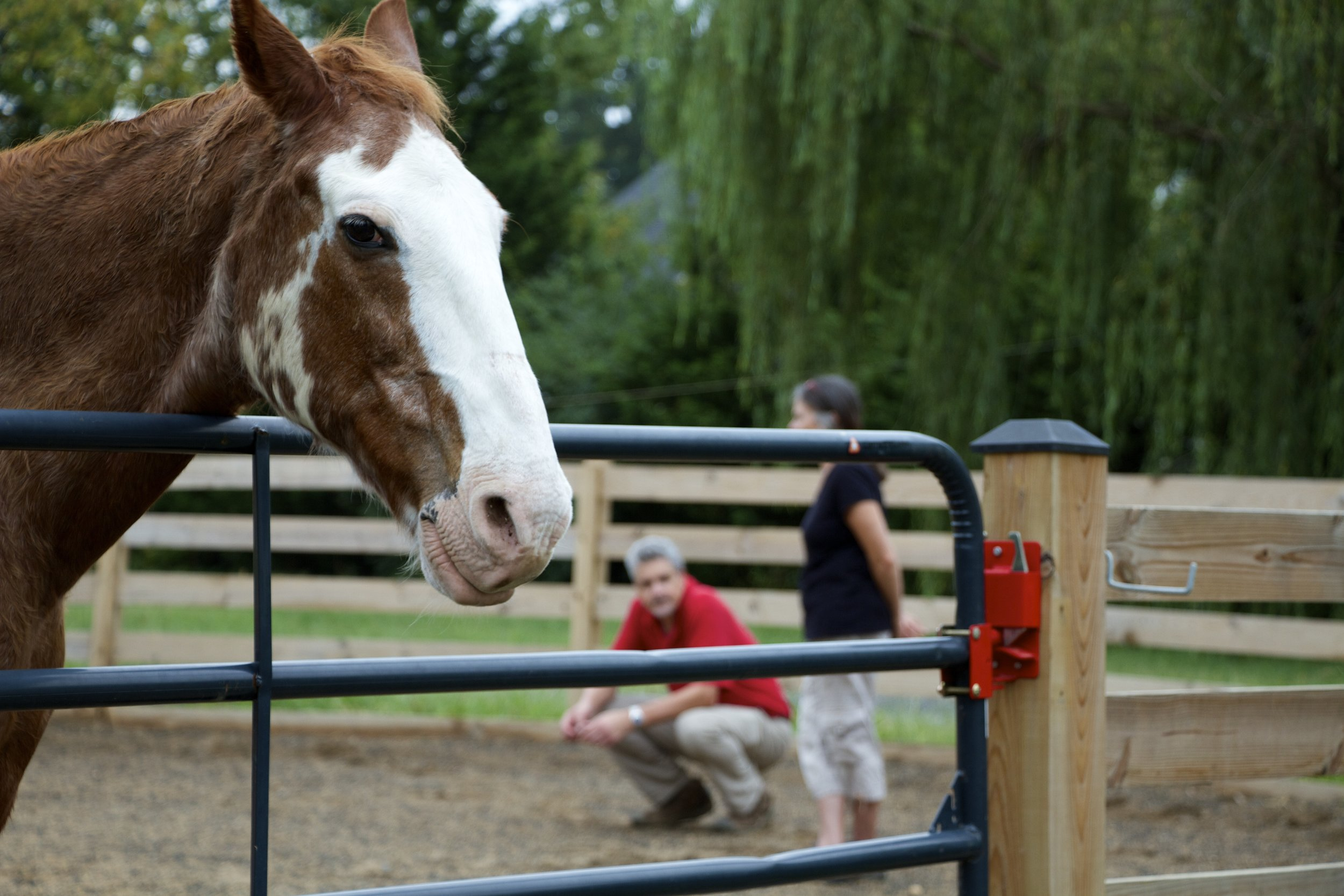 What is equine-assisted coaching