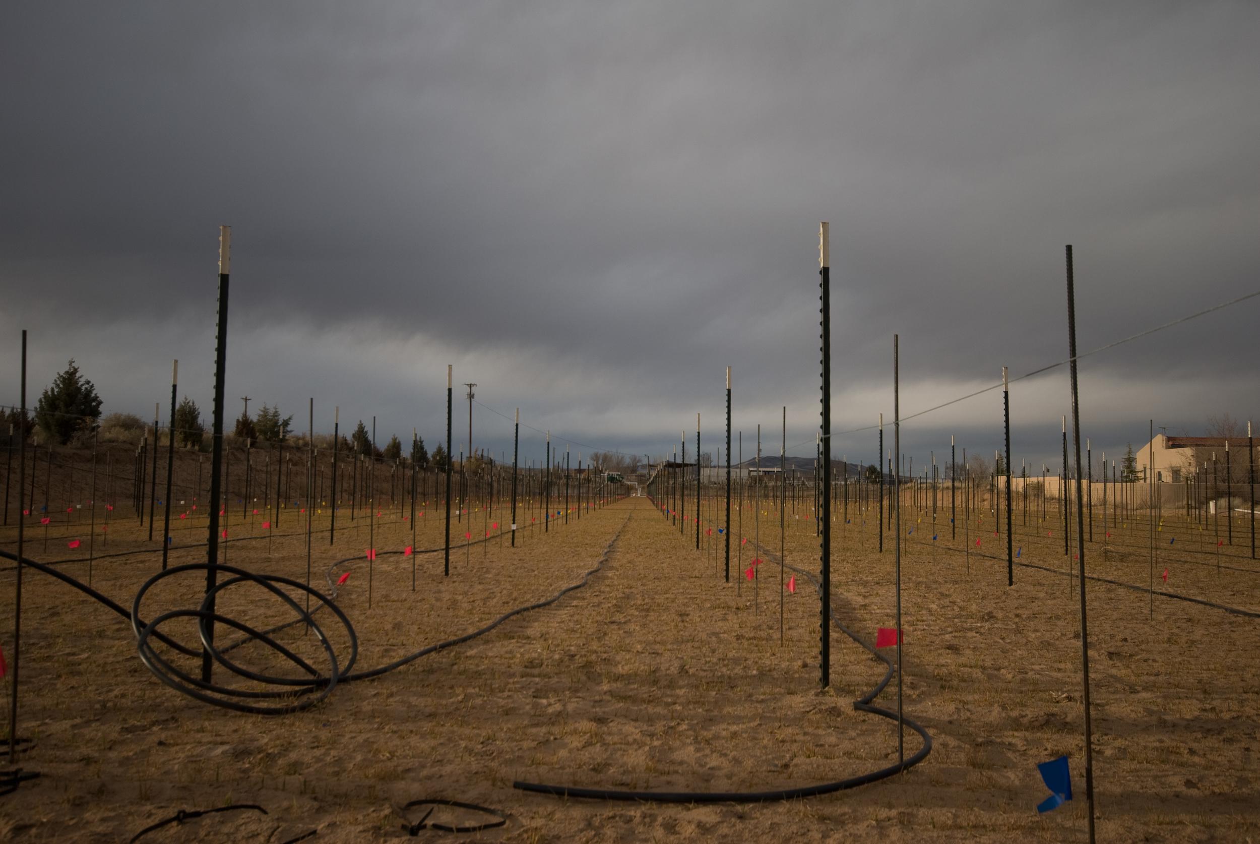 Upper field drip install.