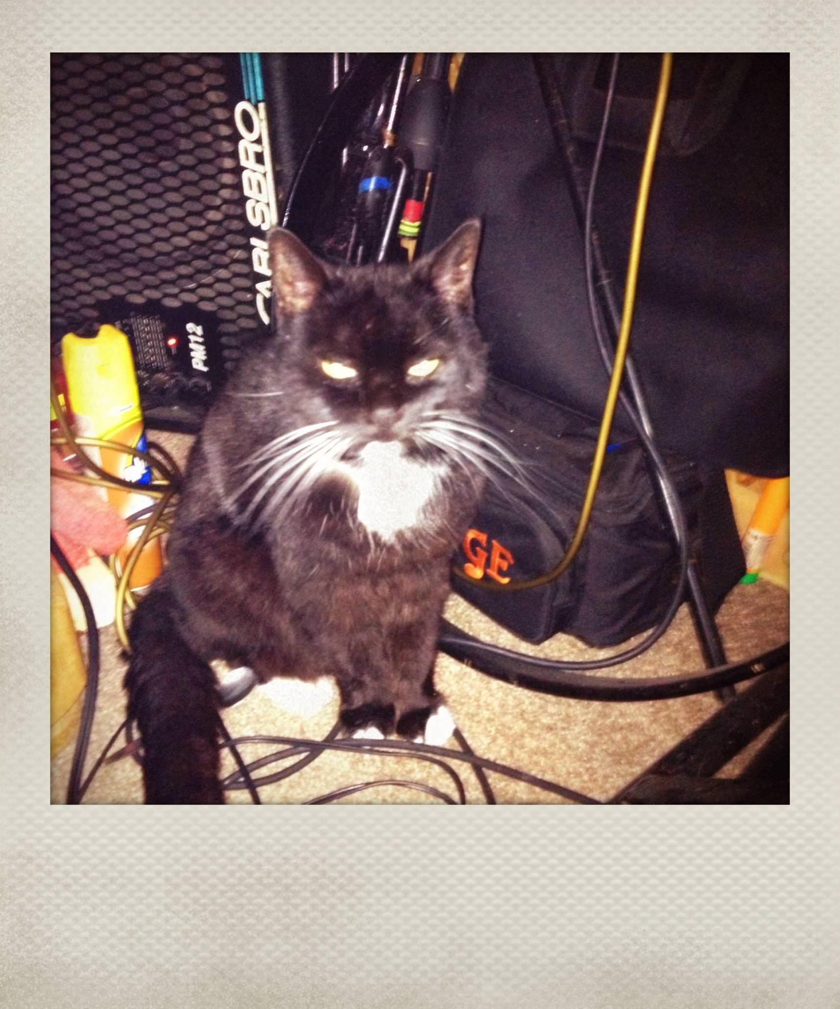 Sigmund, RIP 2001-2104