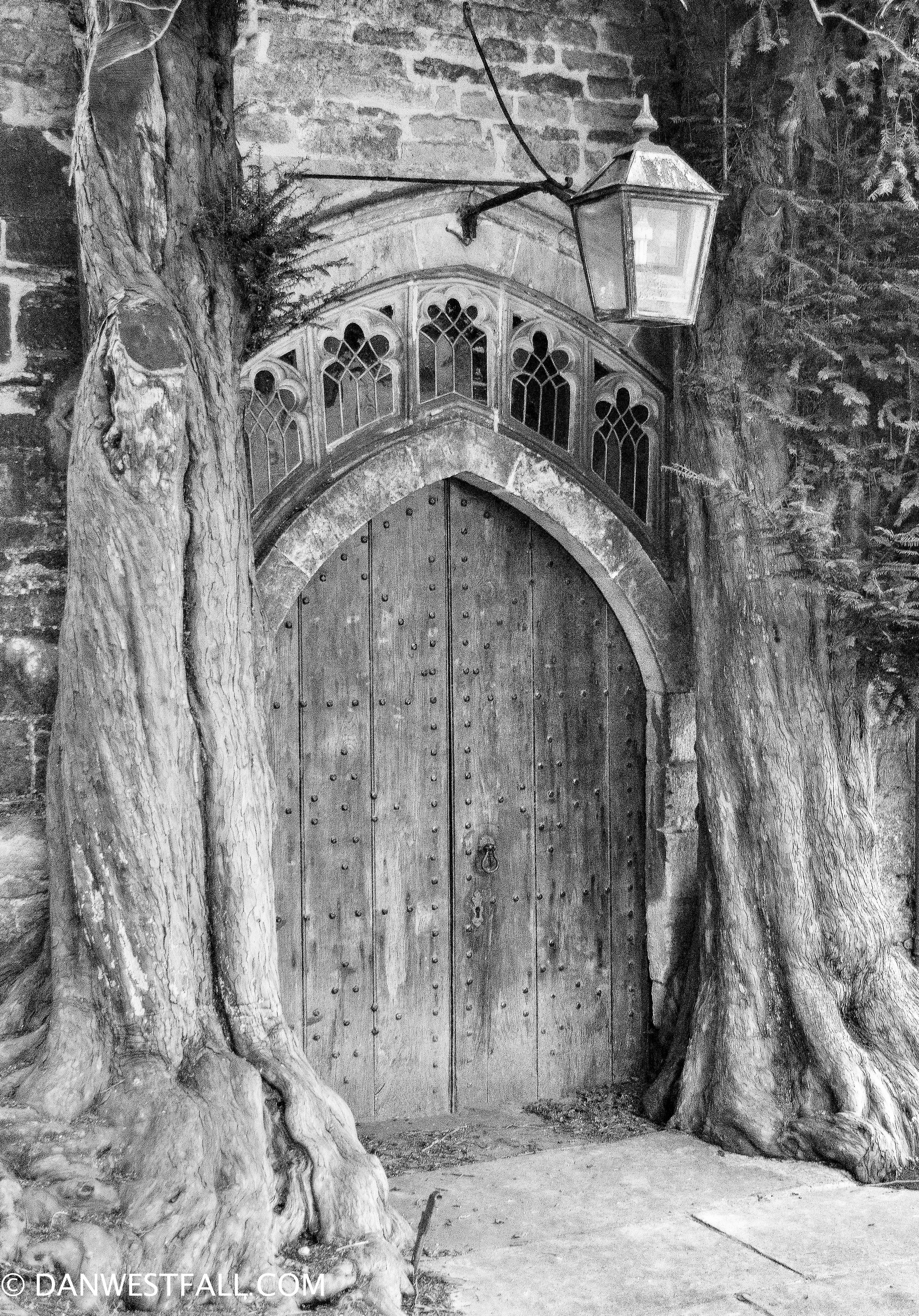 Yew Trees with church door. England #0721