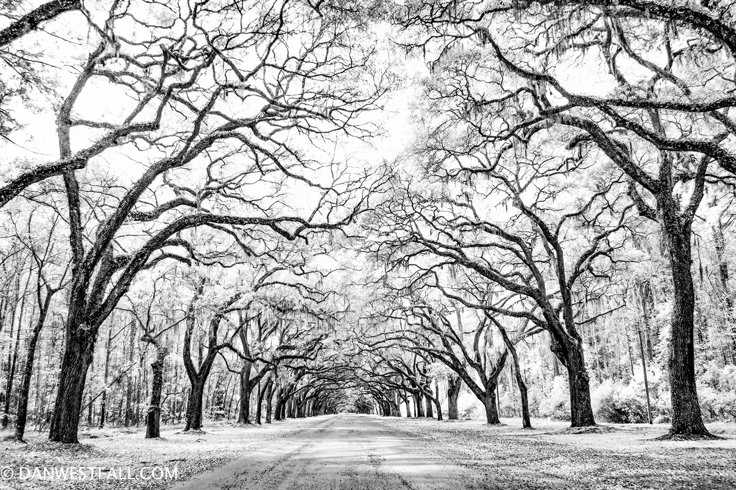 Wormsloe in Savannah USA infrared# 747