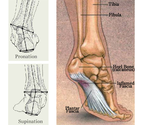 pronationsupination