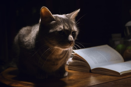 cat with book.jpeg