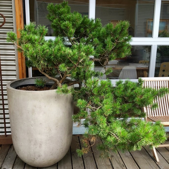Pomarius Nursery - Plants, outdoor decor &landscape design