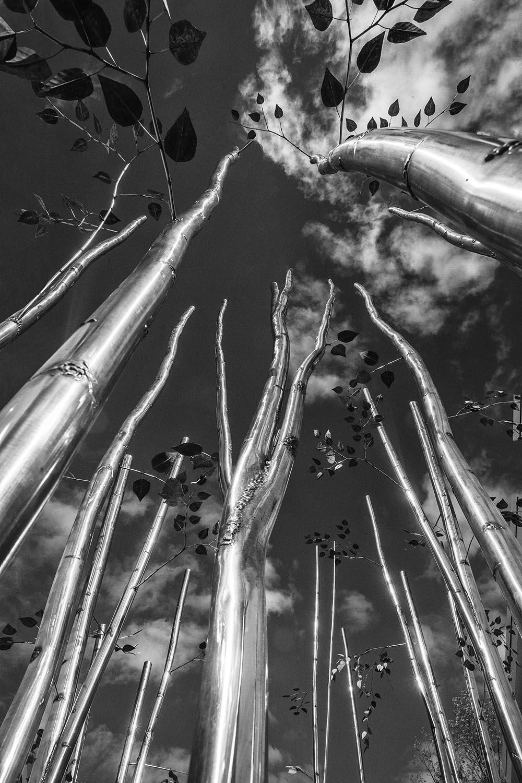Metal tree419 B&W.jpg