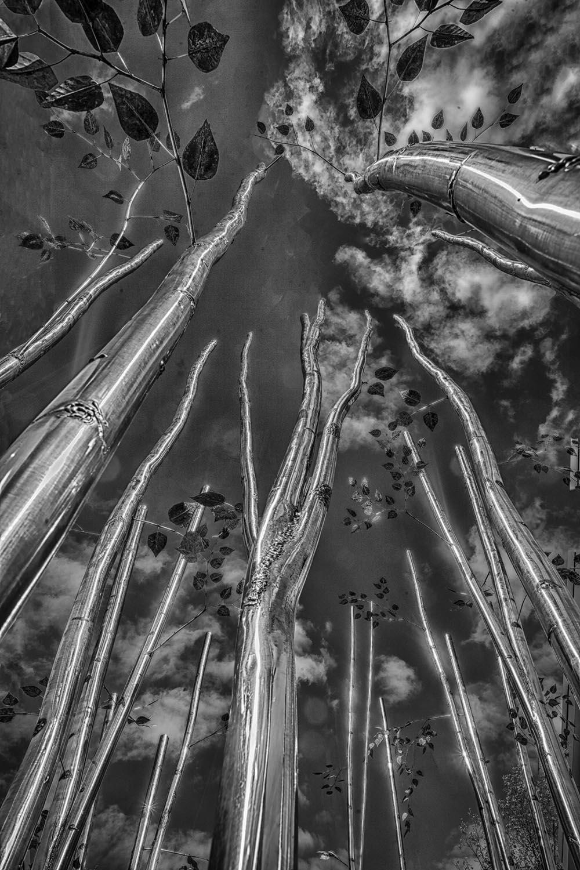Metal tree419 nik15.jpg