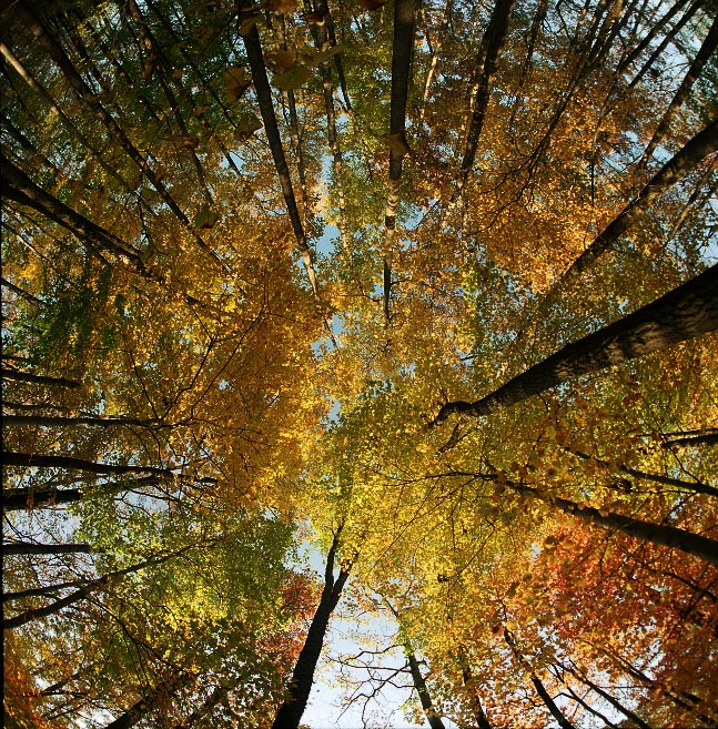 07 Treetops-.jpg