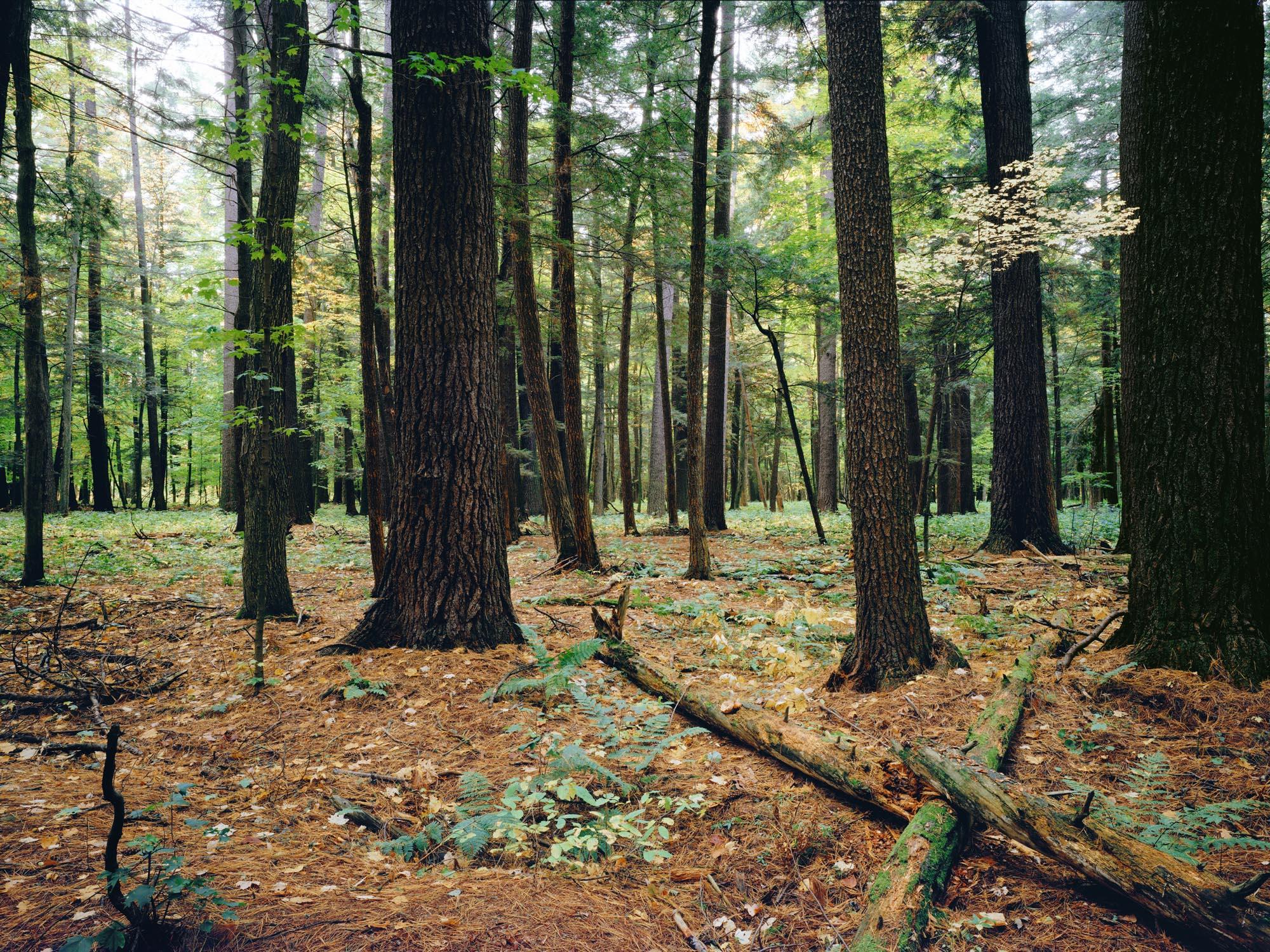 10-Forest.jpg