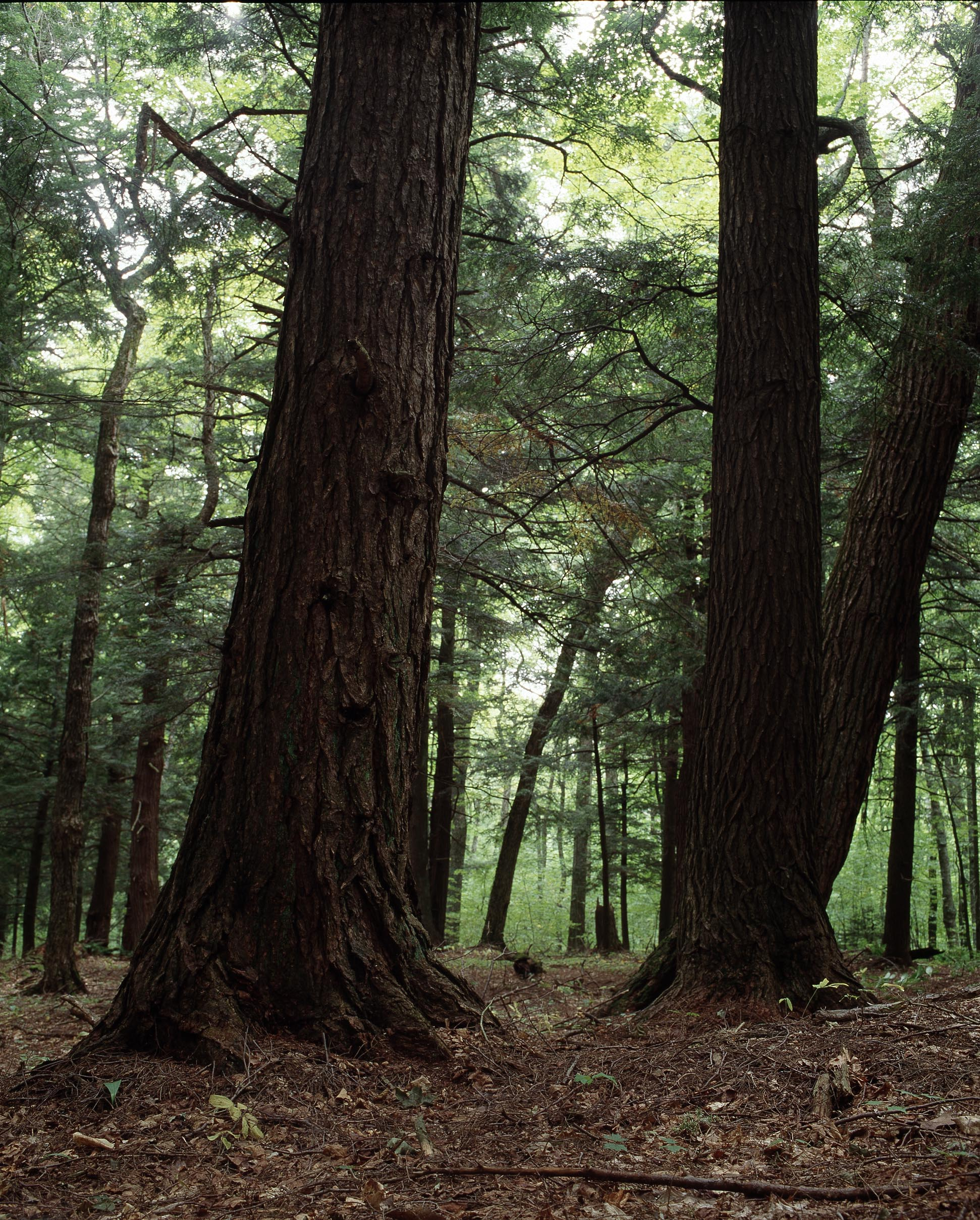 forest_02A.jpg