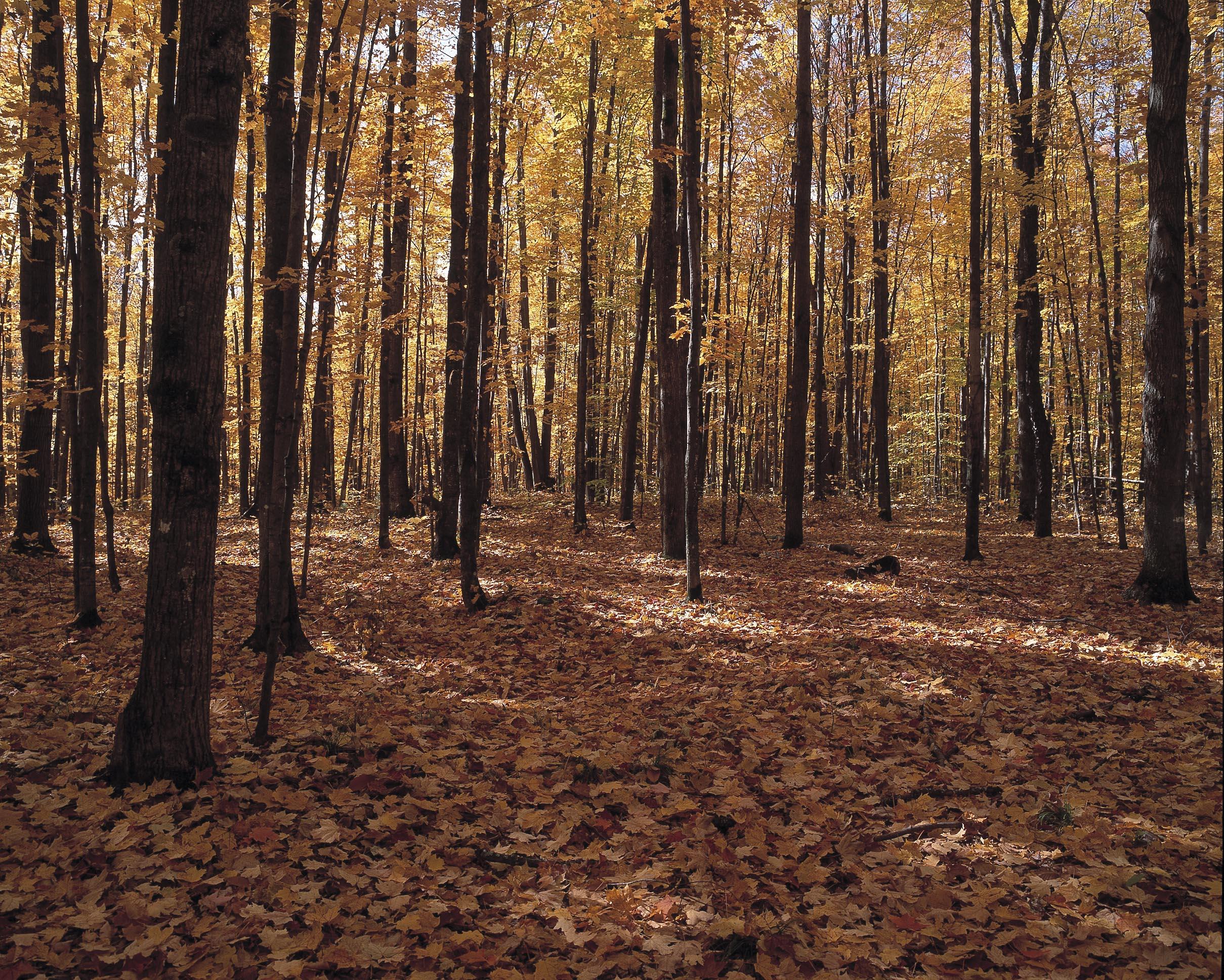 forest_03.jpg