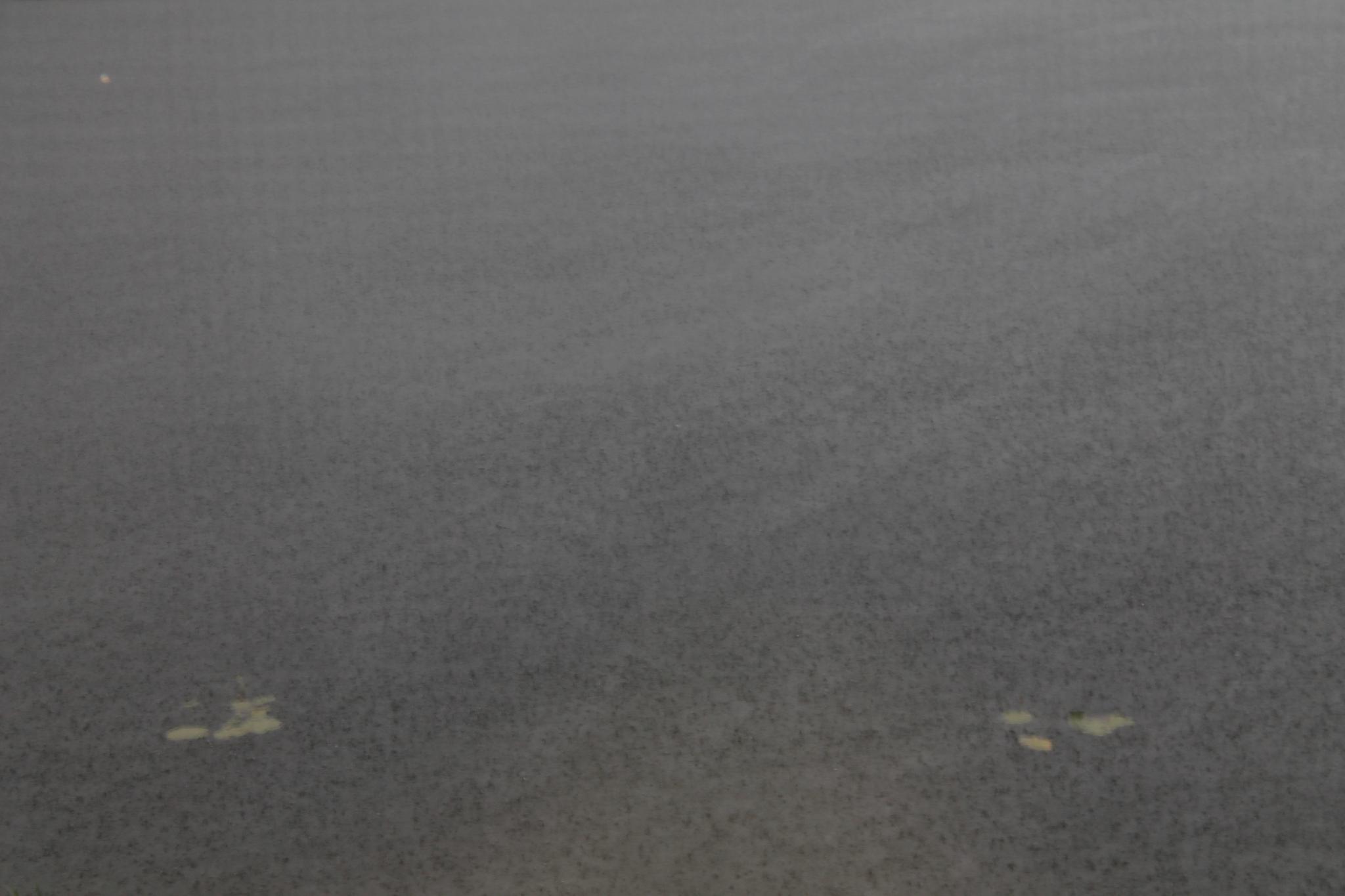 fig. i: summer rain