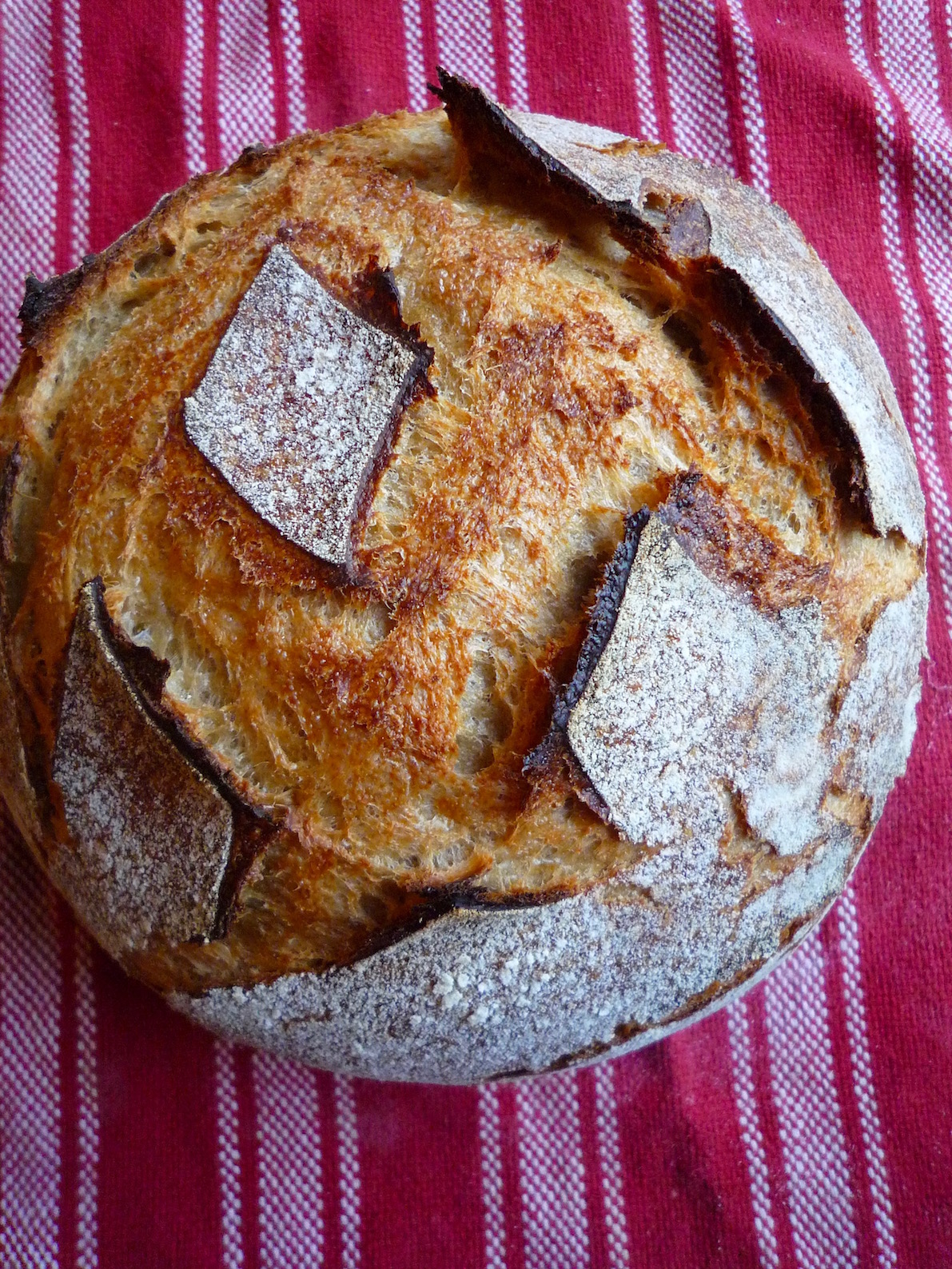 fig. f:  Magog country loaf finished