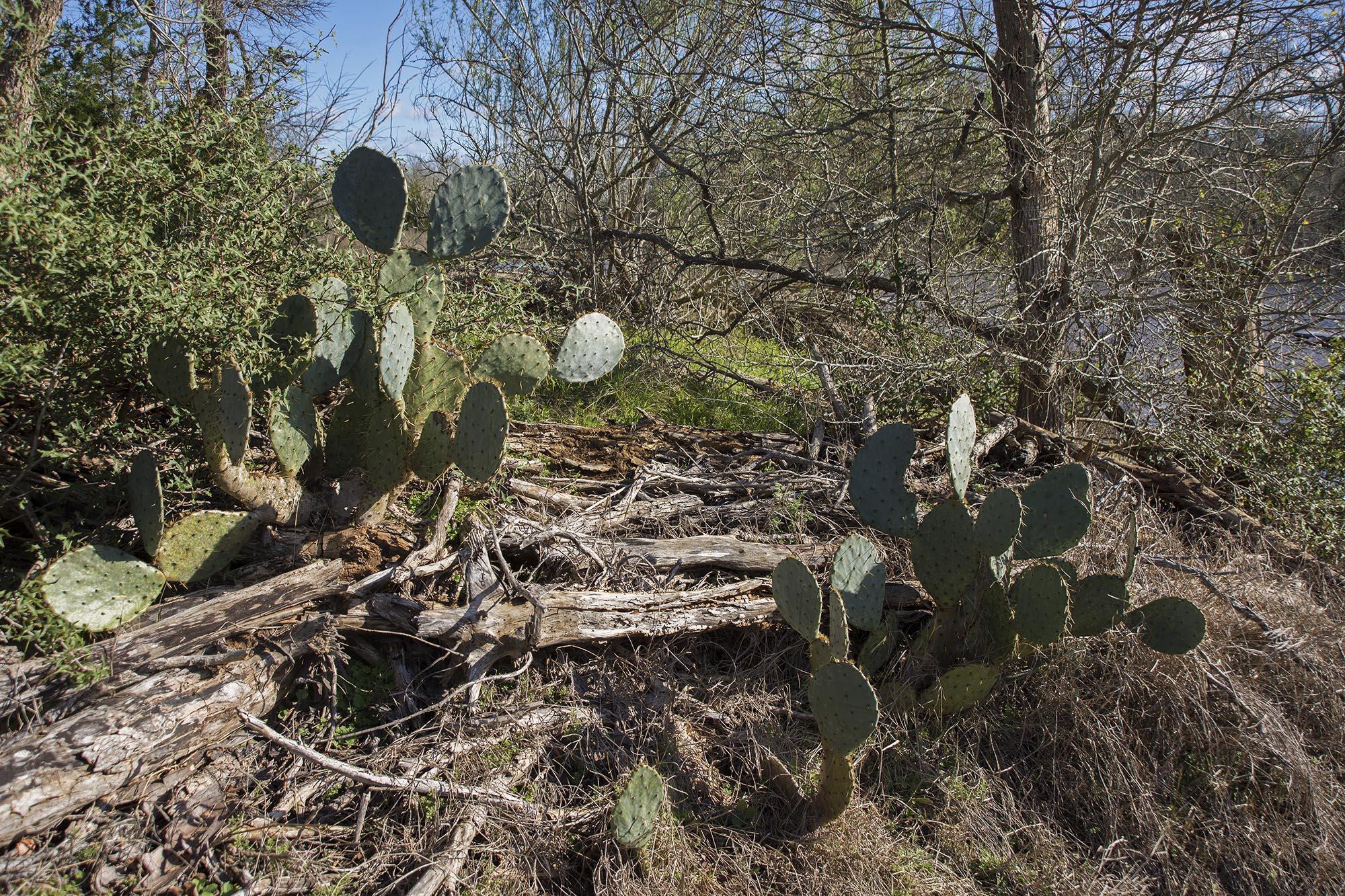 AllanLewis_Texas18.jpg