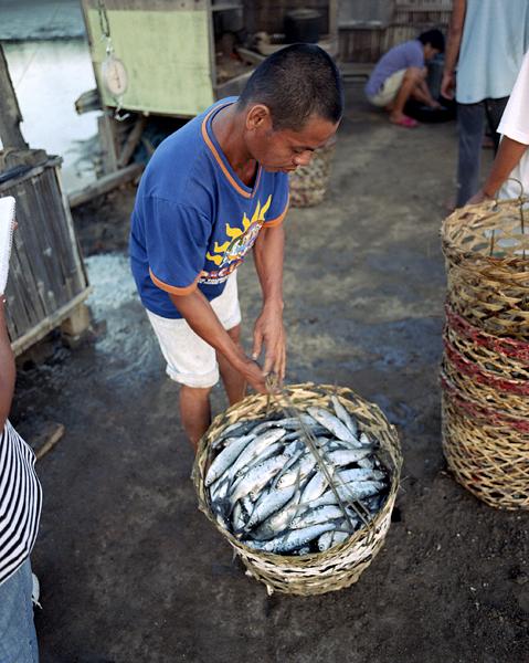 fish harvest 144-600.jpg