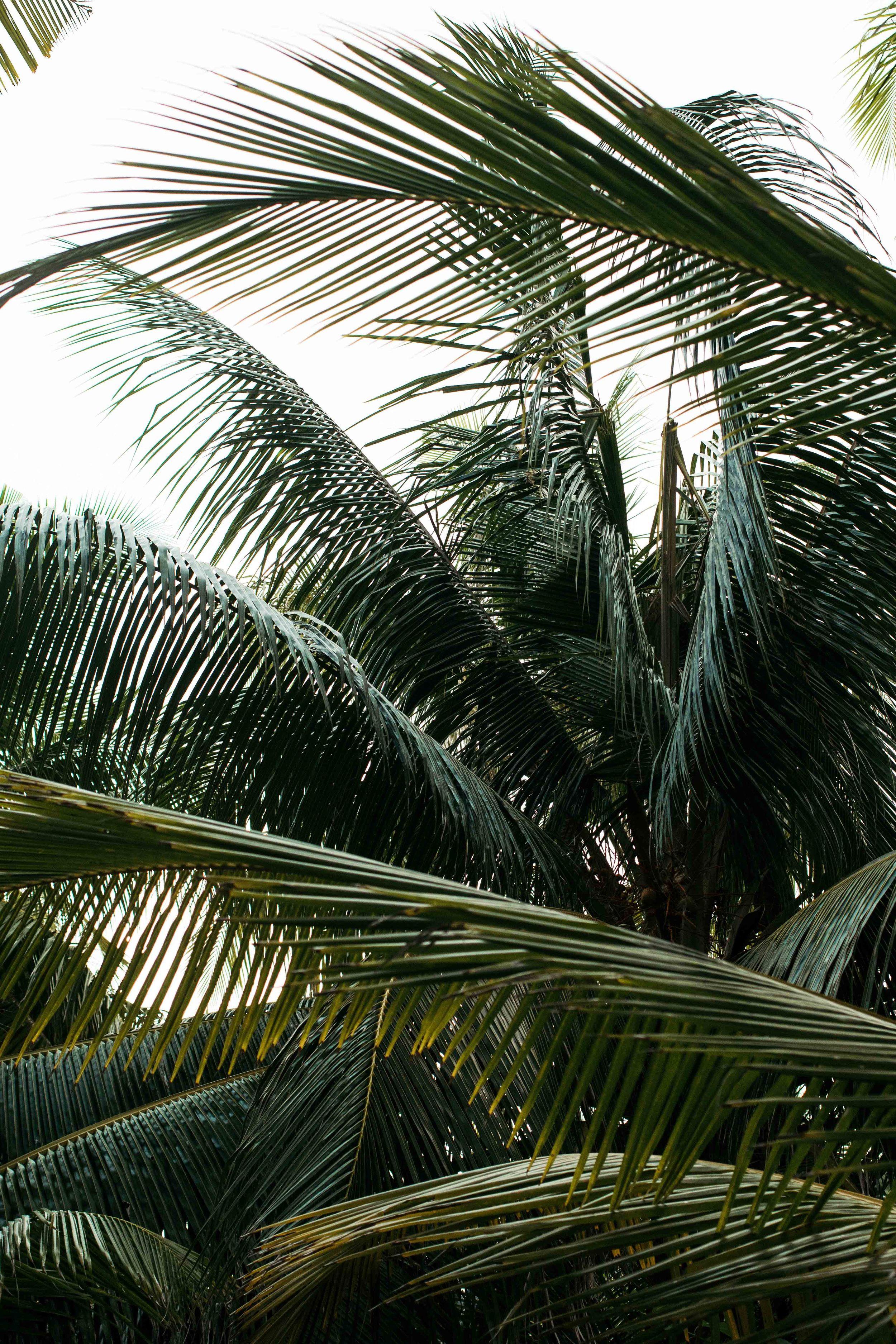 MALDIVES_CORONA_COCONUT COMRADERY_09.jpg