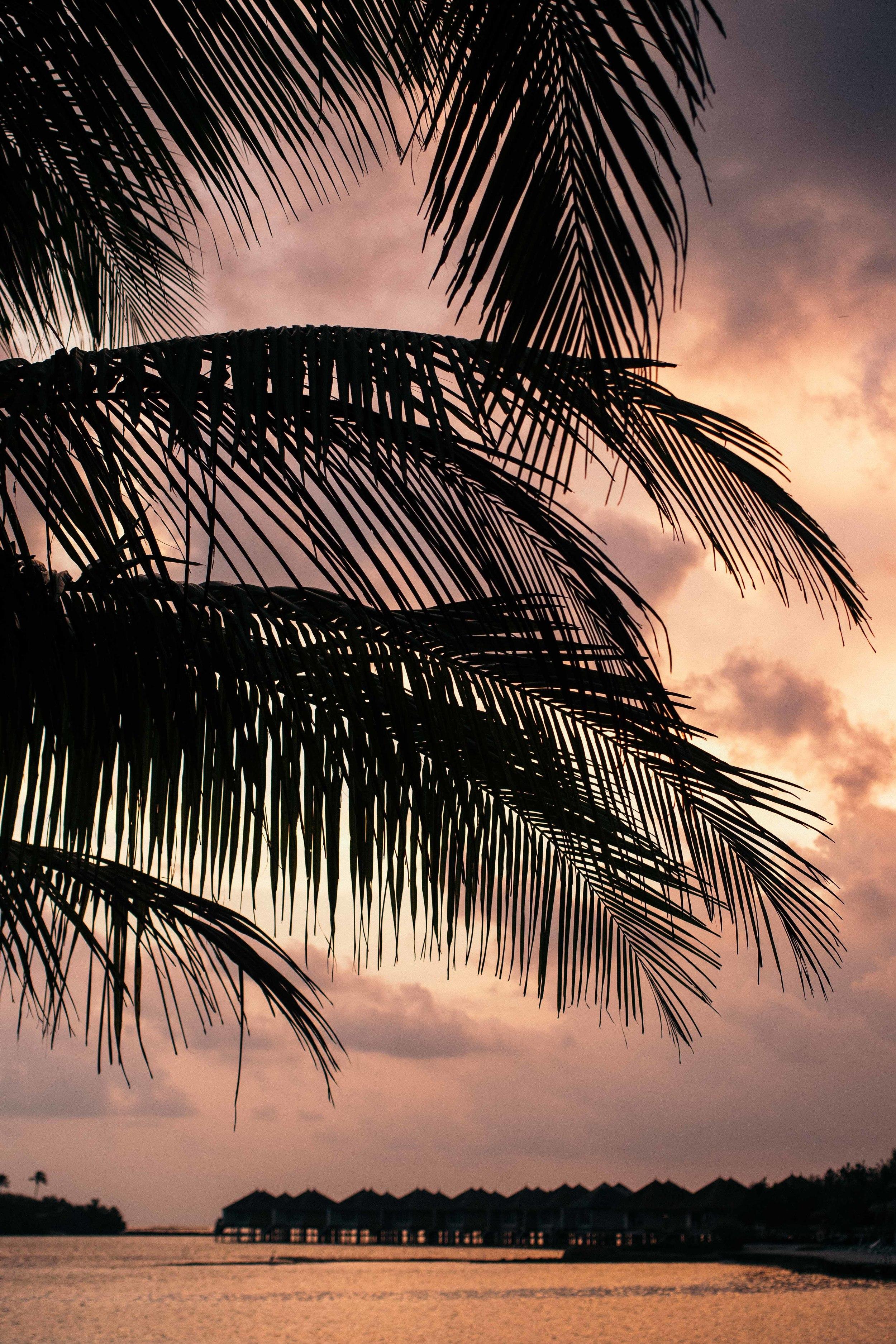 MALDIVES_CORONA_COCONUT COMRADERY_11.jpg